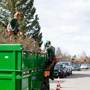 Tree Services Calgary - 54 - Evergreen L