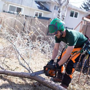 Tree Services Calgary - 19 - Evergreen L