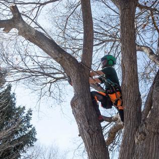 Tree Services Calgary - 41 - Evergreen L