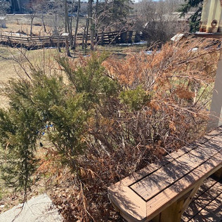 Acreage Tree Clearing - After - 04 - Eve