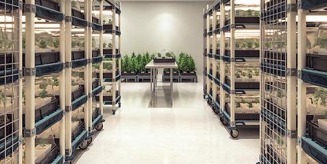 Cannabis Storage Equipment