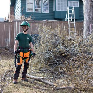 Tree Services Calgary - 44 - Evergreen L
