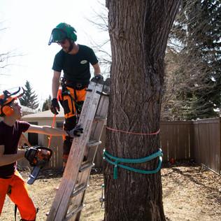Tree Services Calgary - 32 - Evergreen L