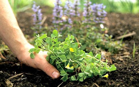 Garden Weeding