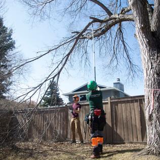 Tree Services Calgary - 11 - Evergreen L