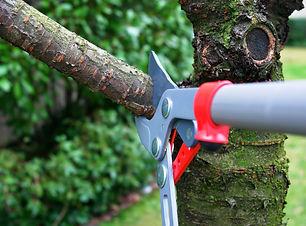 Tree Trimming.jpeg