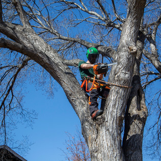 Tree Services Calgary - 34 - Evergreen L
