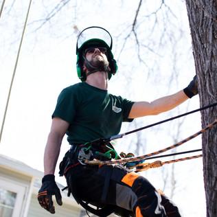 Tree Services Calgary - 29 - Evergreen L