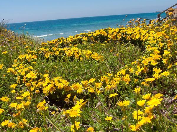 Landart_chrysanthemenspirale_meer.jpg