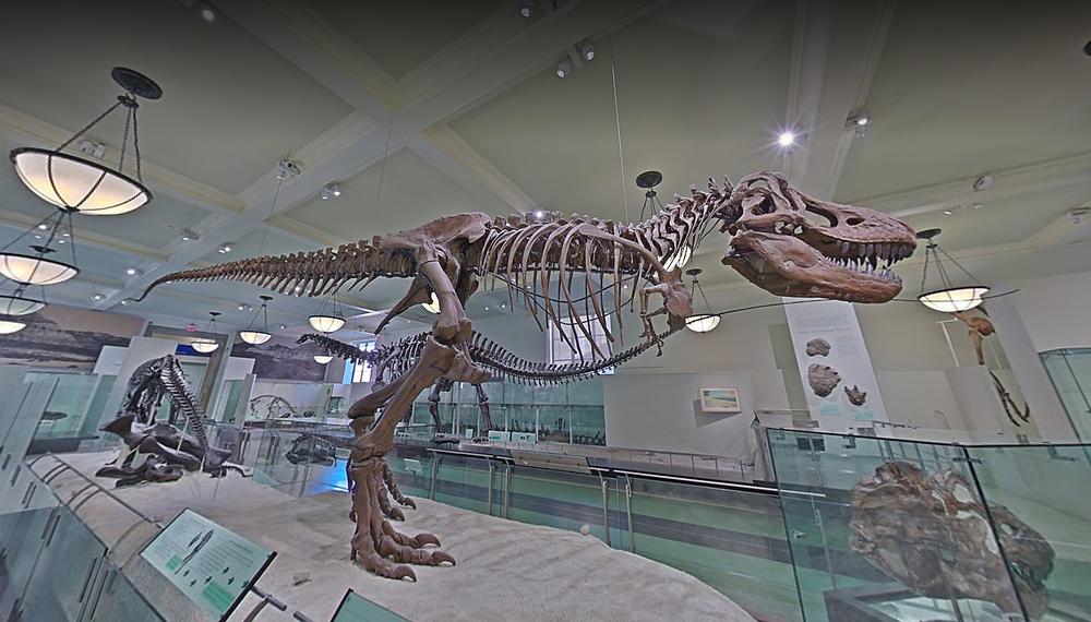 museu de história natural estados unidos