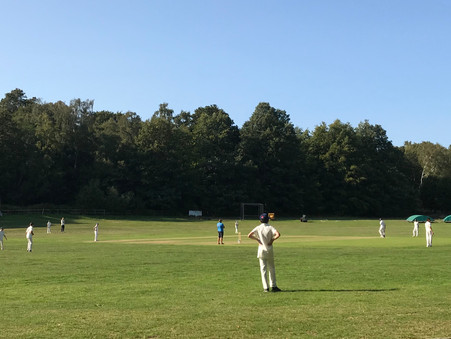 State School cricket to the fore