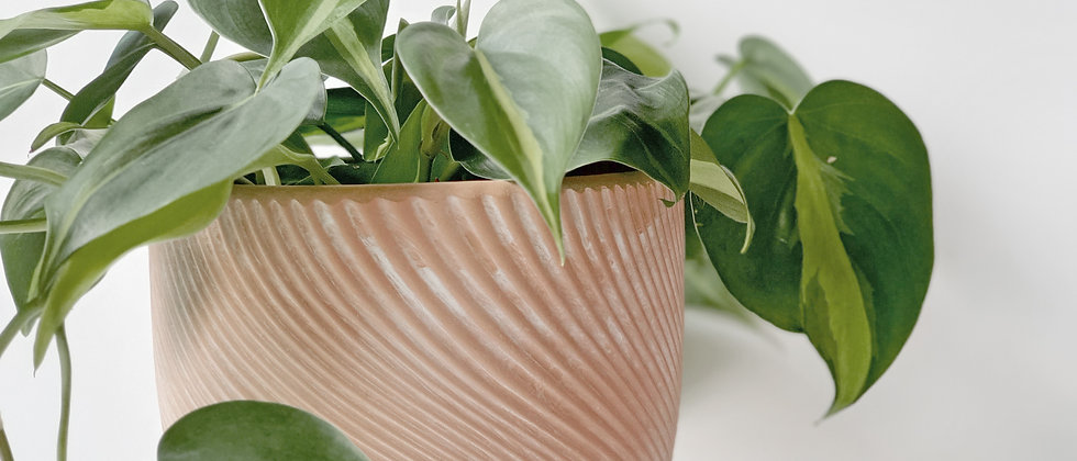 Terracotta Zen Sand Planter Pot
