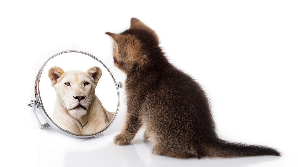 kitten looking in a mirror with a lion's reflection