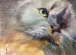 家里的老大_Pet _oil on canvas _24x33cm