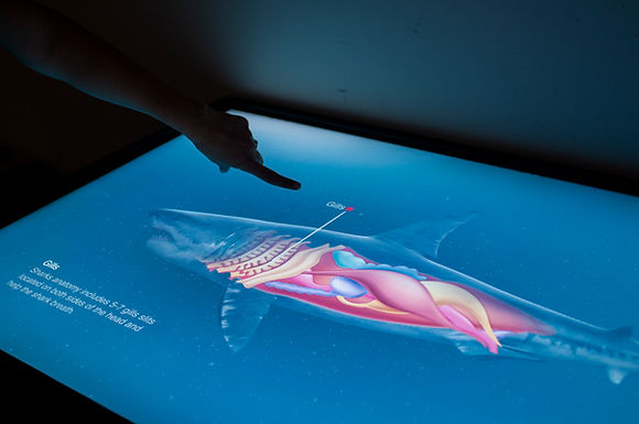 interactive aquarium games