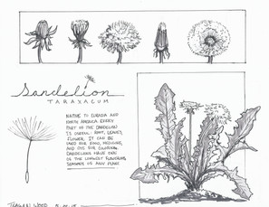Design Drawing Class | Plant Study