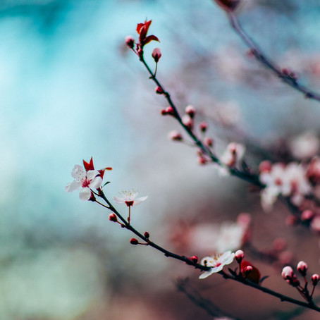 """""""Et il me parla de cerisiers, de poussière et d'une montagne..."""""""