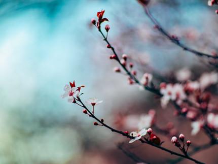 昭和ノスタルジー③    春になれば