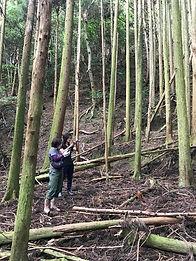 対馬の森の林内の様子1.jpg