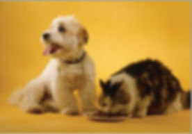 dog with cat - managing renal disease.jp