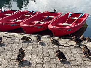 Barques-Champex-Canards.JPG