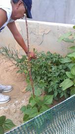 George Puhuyouma - Recovery Garden