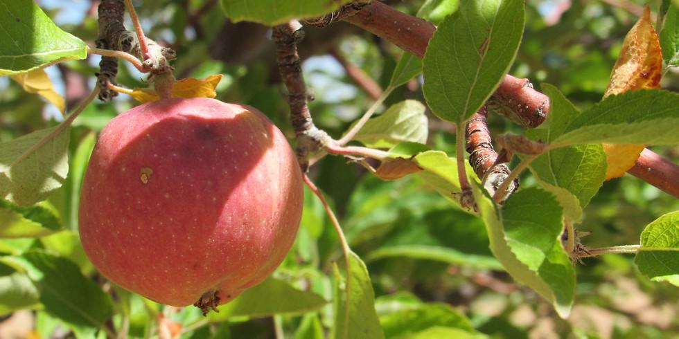 Virtual Fruit Tree Pruning Workshop