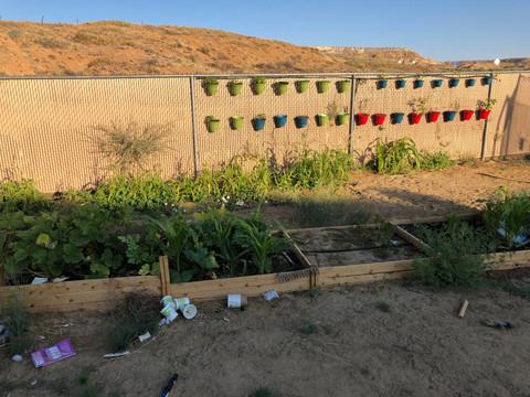 Matthew Honanie - Family Garden