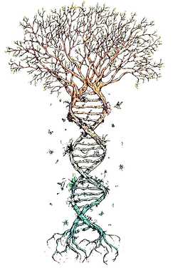 arbre adn
