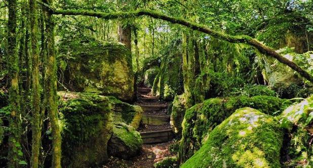 Forêt enchantée de Nebias