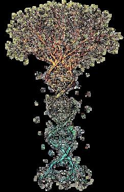 arbre adn inverse