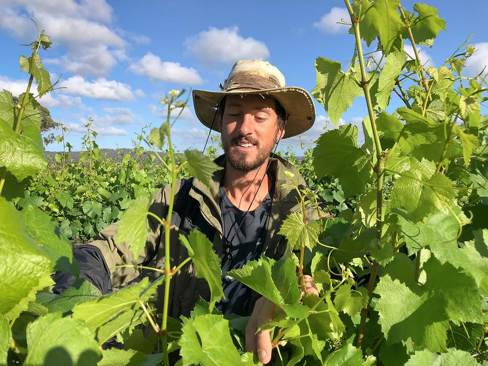 Romain in the vines