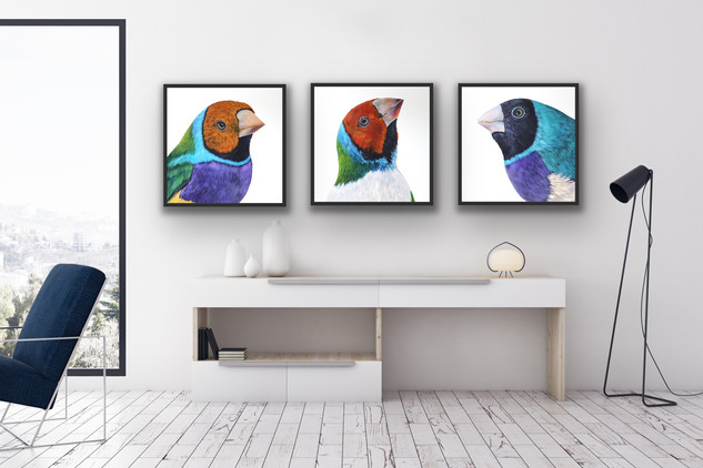 The Gouldian Triptych