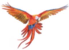 macaw crop.png