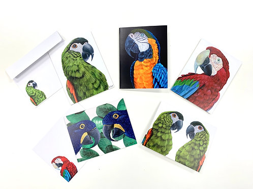 Exotic macaw greeting card pack of 5