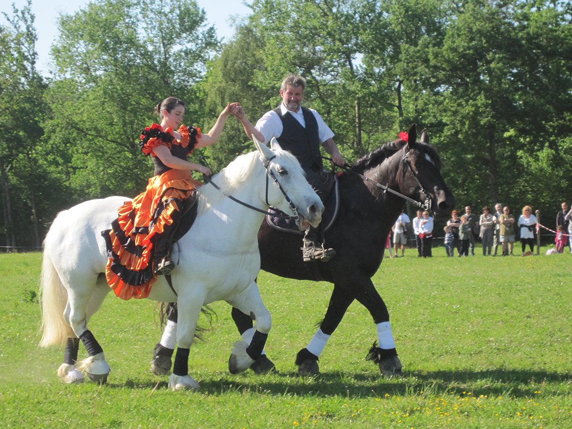 Trait Percheron_Ain