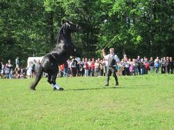 Démonstration cheval trait Ain