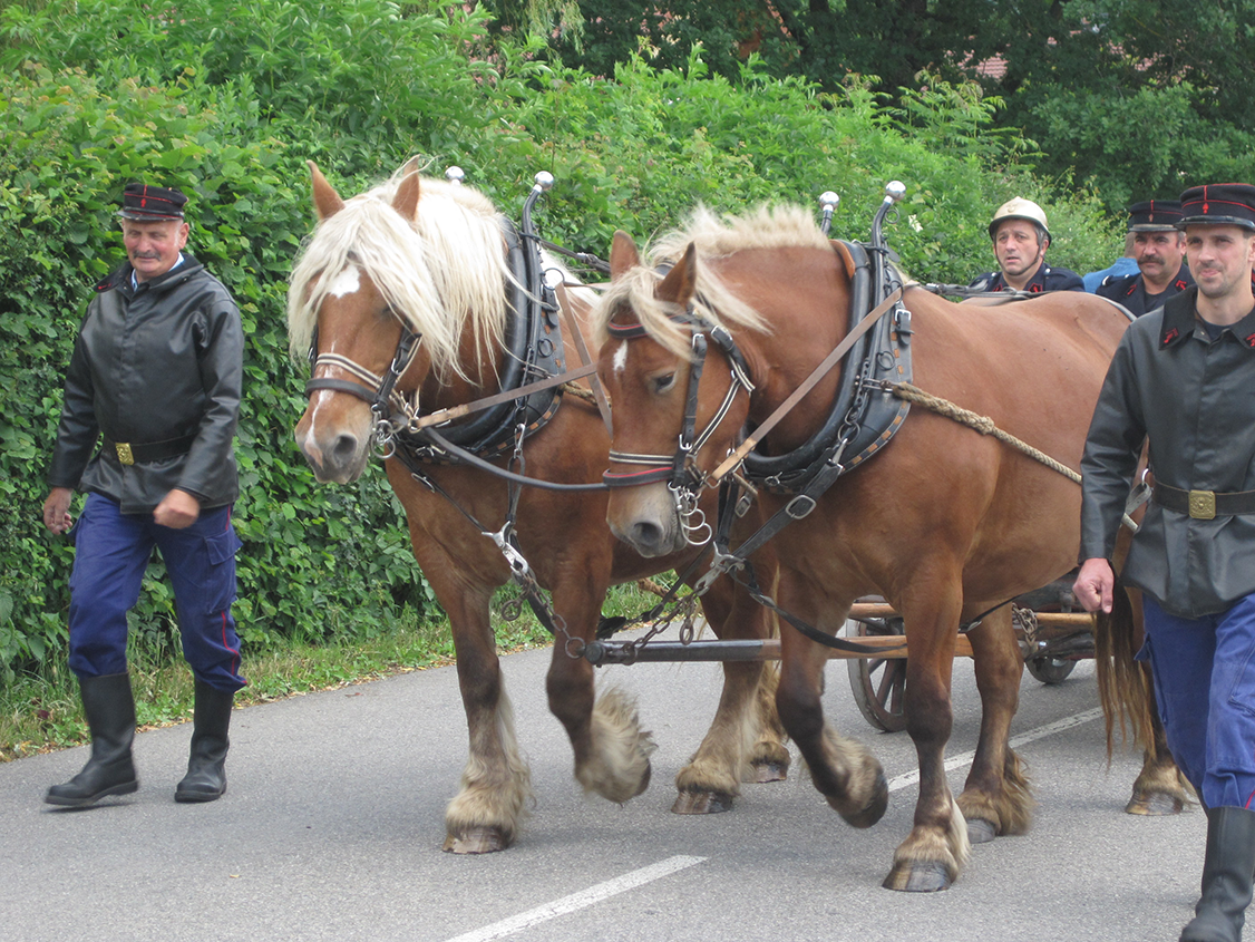 Traction chevaux défilé