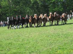Présentation Trait élevage Ain