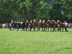 Présentation chevaux Ain