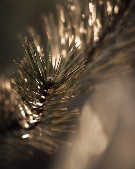 Páros fotózás - Soft Light Visuals - Vik