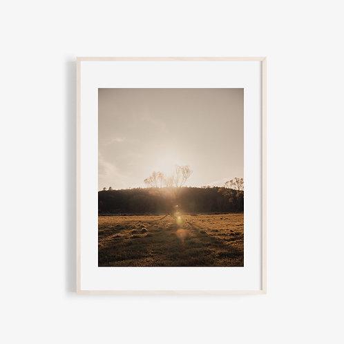 Soft Light Visuals - Sunset behind the tree