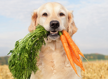Healthy Snacks for your Dog!