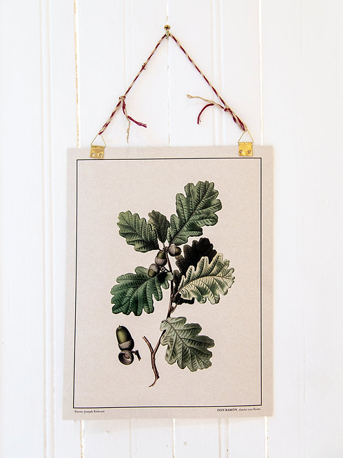 2 Láminas botánicas
