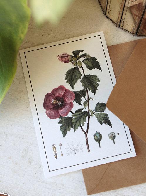 Postal Hibiscus