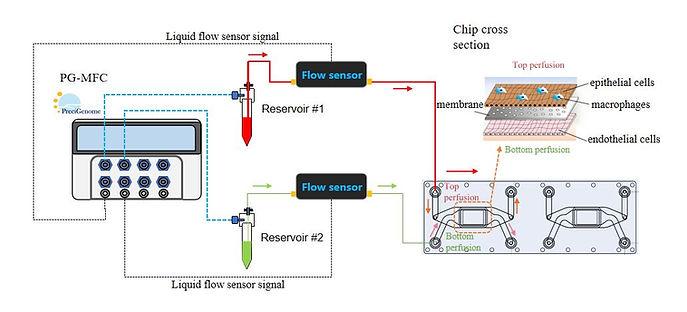 organ-on-a-chip_system_basic_touchscreen, organ on a chip, organ on chips, cell model, drug delivery, organs on a chip, organ on chips, human on a chip, organ chips