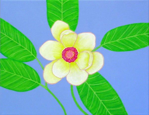 magnolia_4902176667_o.jpg