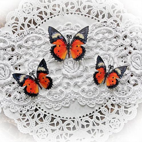 Hello Autumn Premium Papr Glitter Glass Butterflies