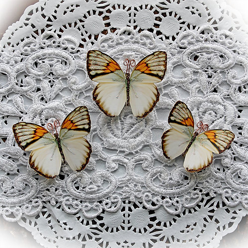 Harmony Premium Paper Butterflies