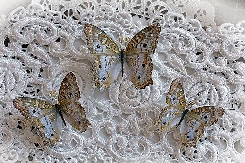 Lady Godiva Butterflies